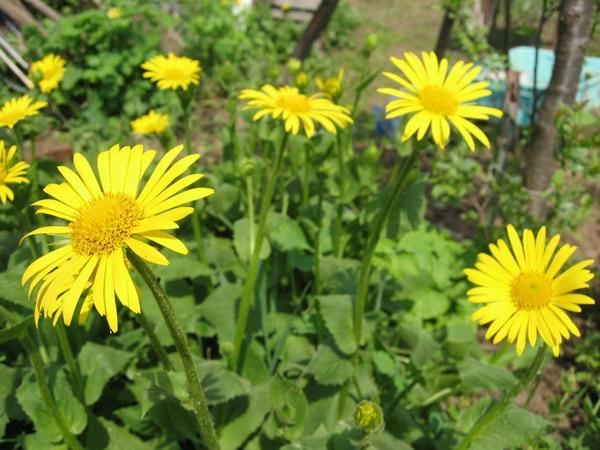 Жёлтенькие цветочки