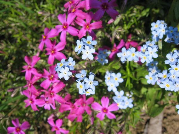 Ещё цветочки с дачи
