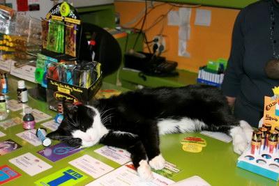 Амстердамский кот
