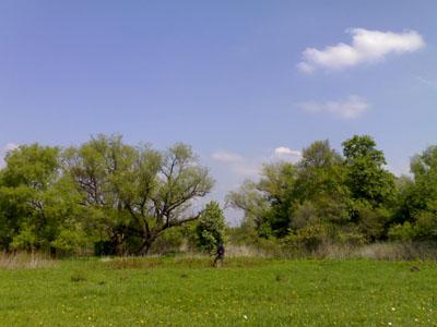 Полянка с деревцами вдалеке. Природа, птички поют.