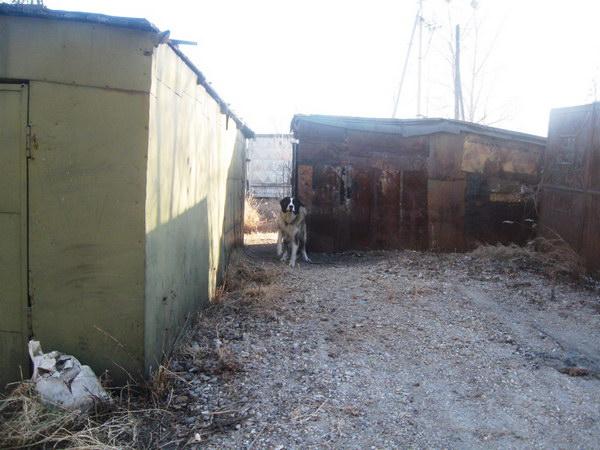 Это уже другой зелёный гараж, прям сзади по отношению к прошлой фотке.