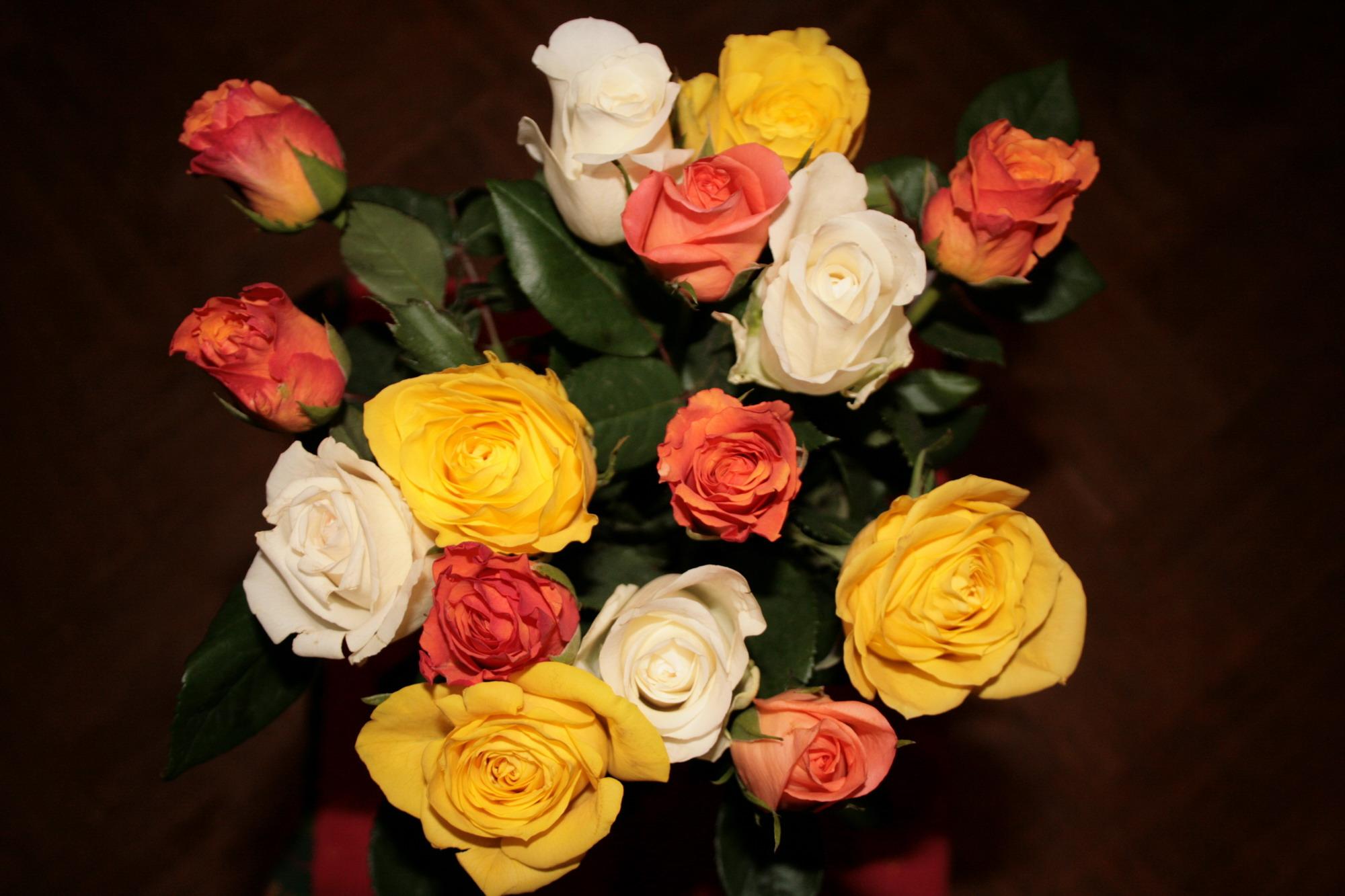 Подаренные цветы фото и названия