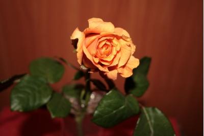 Симпатишный цветочек